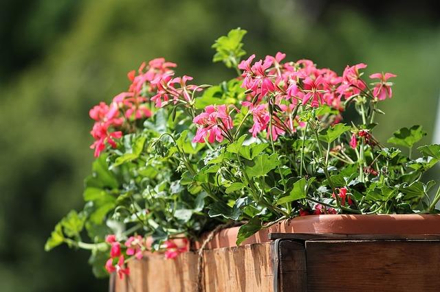Kwiaty ozdobą balkonów – kwiaty cięte i doniczkowe. Balkon, kwiaty, drzewa