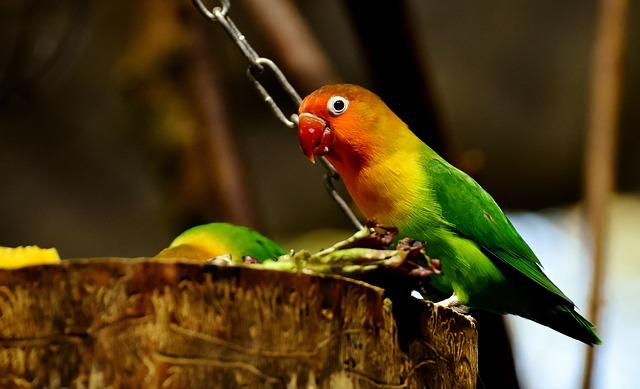 Zdrowie twojej papugi.