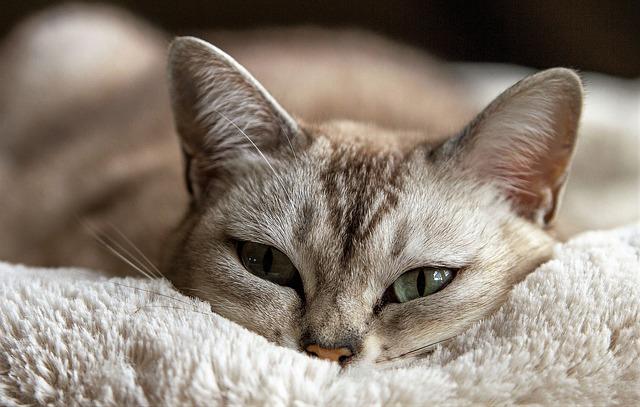 Właściwa opieka nad kotem